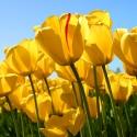 面朝大海◐▂◐春暖花