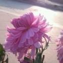 一朵小花s41u61