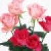 sina_3189565992